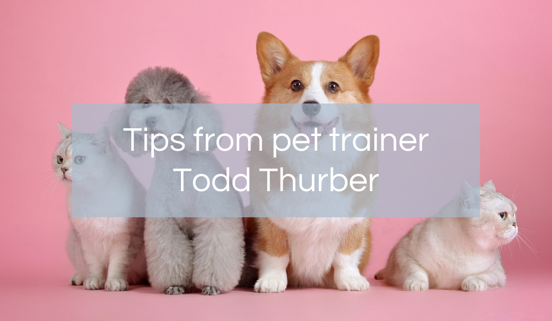Tips from pet trainer Todd Thurber